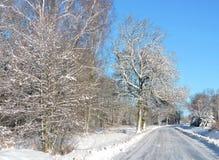 Route et beaux arbres d'hiver, Lithuanie Photo libre de droits