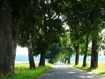 Route et beaux arbres, Lithuanie Images stock