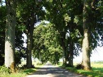 Route et beaux arbres, Lithuanie Photos stock