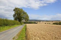 Route et blé de campagne photos libres de droits