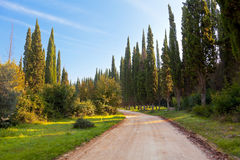 Route et cyprès rocheux Image libre de droits