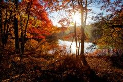 Route et feuillage d'automne autour de lui Image stock