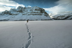Route express de champs de glace dans rocheux canadien Photographie stock