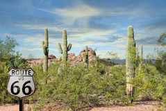 Route 66 fabulous scenery cactus red rocks beautiful sunset Arizona Desert. Route 66 view of the Arizona Desert Tall Cactus and red rock Stock Image