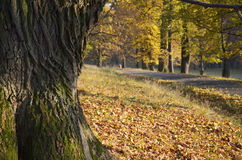 Route with fallen leaves Royalty Free Stock Photos