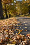 Route with fallen leaves Stock Photos