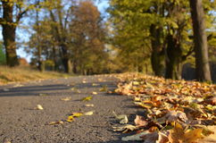Route with fallen leaves Stock Photo