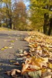 Route with fallen leaves Stock Image
