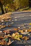 Route with fallen leaves Royalty Free Stock Photo