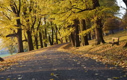 Route with fallen leaves Stock Photography