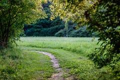route foncée de voie de gravier dans la forêt de soirée Photographie stock