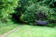 route foncée de voie de gravier dans la forêt de soirée Photo libre de droits
