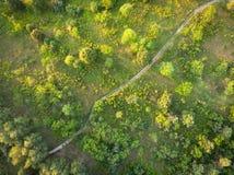 Route, forêt et champ - vue supérieure Images stock