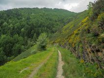 Route through the forest. In the Irati forest in Navarra royalty free stock photography