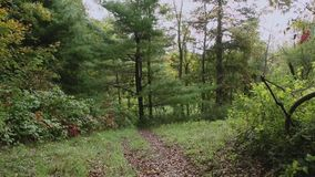 Route through the forest (6 of 7) stock video footage