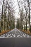 Route goudronnée bordée d'arbres images libres de droits