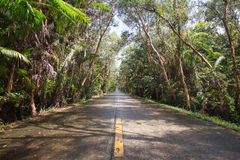 Route goudronnée dans la forêt photo stock