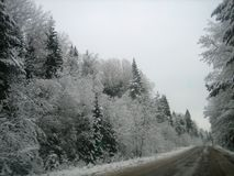 Route goudronnée dans la forêt profonde un jour humide d'hiver photographie stock libre de droits