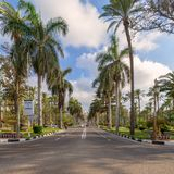Route goudronnée encadrée par des arbres et des palmiers avec le ciel partiellement nuageux dans un jour d'été au parc public du  Images libres de droits