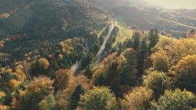 Route grise merveilleuse parmi la forêt dense avec des ombres d'arbre banque de vidéos