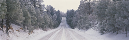 This is Route 64 after it has snowed. There is snow on the trees and several cars have driven over the snowy road as you can see stock images