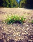 Route, herbe, été, forêt, plan rapproché Photos stock