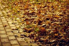 Route humide d'automne de la tuile avec les feuilles jaunes photo libre de droits
