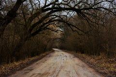 Route humide dans la forêt Photos stock