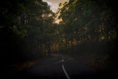 Route humide de enroulement dans forrest Images stock
