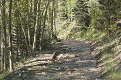 Route inondée de montagne image libre de droits