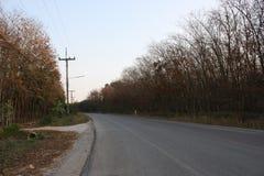 Route intéressante avec les arbres en caoutchouc contre le ciel Photos stock