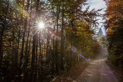 Route latérale en Slovénie Photo libre de droits