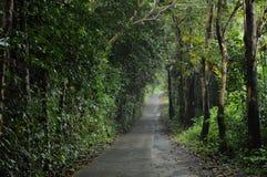 route locale à la forêt dans le jour pluvieux photographie stock libre de droits