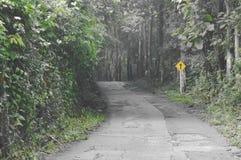 route locale à la forêt dans le jour pluvieux images libres de droits