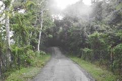 route locale à la forêt dans le jour pluvieux photo stock