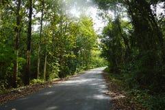 Route locale de perspective à la forêt en Thaïlande image stock