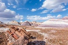 Route 66: Madeira hirto de medo, Mesa azul, deserto pintado, F petrificado imagens de stock