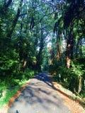 Route menant dans les bois image libre de droits