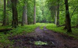 Route moulue droite menant à travers la forêt Photographie stock