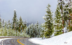 Route neigeuse de parc national de Yellowstone photographie stock libre de droits