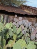 Route 66 through Oatman, Arizona. Cactus and an old metal building, Route 66 in Arizona stock photo