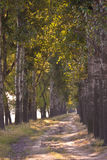 Route ouverte d'arbre Photo libre de droits
