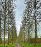 Route par des arbres Image stock