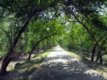 Route par des arbres Photos libres de droits