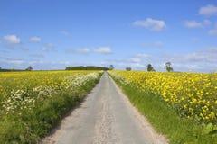 Route par des champs de moutarde Photographie stock libre de droits