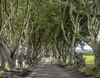 Route par l'allée foncée de haies, Armoy, Irlande du Nord images stock