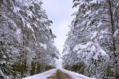 Route par l'hiver de forêt, route, hiver impeccable de forêt, paysage froid chutes de neige lourdes photographie stock libre de droits