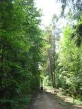 Route par la forêt à feuilles caduques Images stock