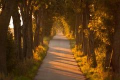 Route par la forêt Photo libre de droits