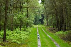 Route par la forêt Image stock